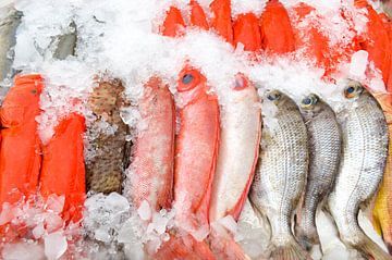 Verse rode vis op ijs van Reis Genie