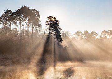 Sonnenaufgang mit Nebel und Enten von Evelien Oerlemans