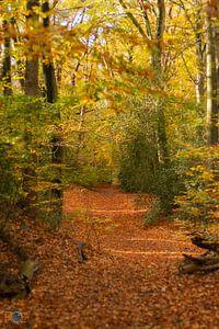 Nederland in herfstkleuren. van Arnold Loorbach Photography