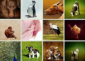Tiercollage van Heike Hultsch