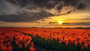 Oranje von Klaas Fidom