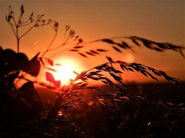 Ondergaande zon in Engeland von Lisanne Rodenburg