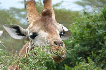 Hongerige giraffe van Daisy Janssens