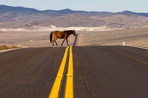 Wild Paard in Nevada VS. Vrijheid steekt over  van Dirk Huijssoon