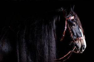 Portret van een Shire, paard van Annet van Esch
