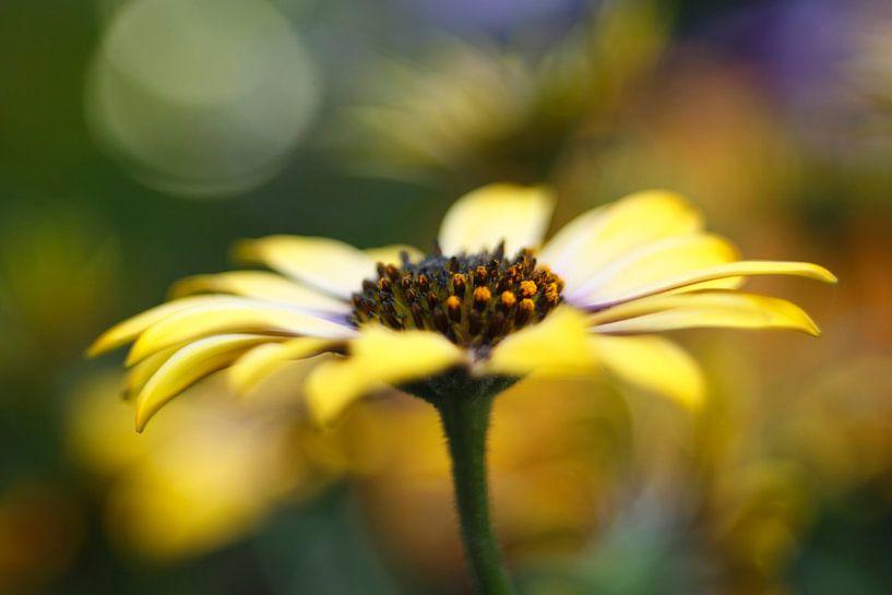 Dancing Petals.... van LHJB Photography