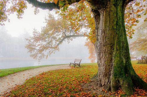Romantisch bos in Leiden