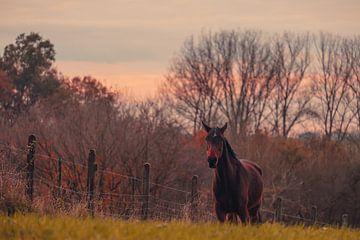 Pferd auf der Heide von Dieter Emmerechts