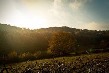Zon in de herfst van