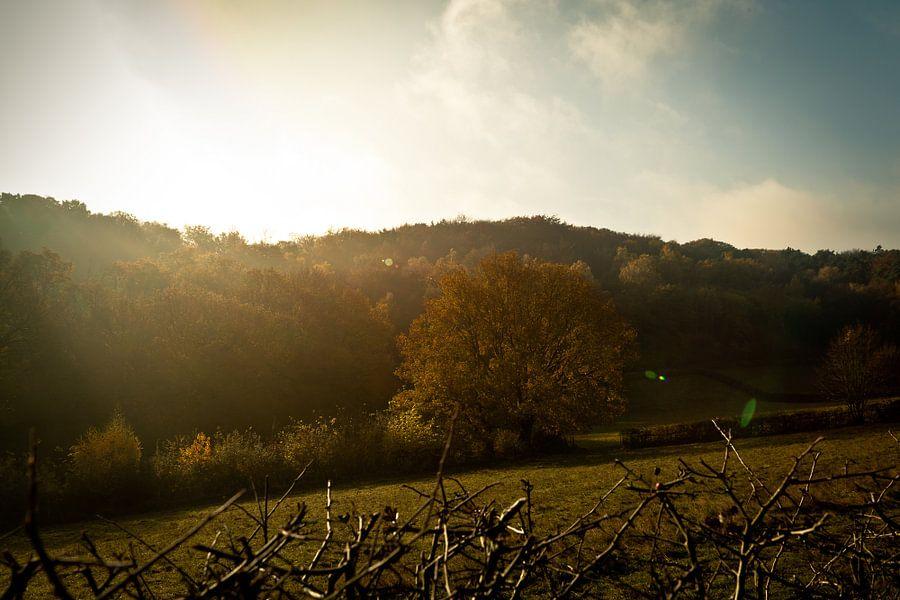 Zon in de herfst