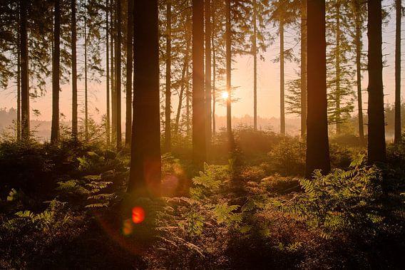 Zonsopkomst in de Ardennen