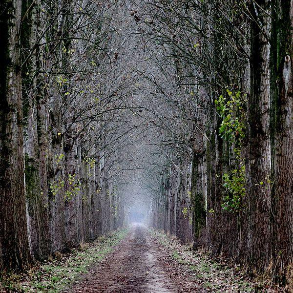 Laan in de herfst van Elbert Brethouwer