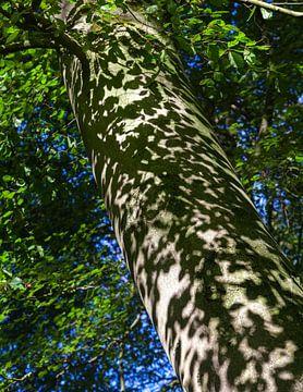 Schaduwen in het bos van Nel Diepstraten