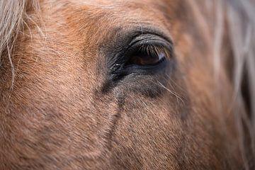 Close-up van het linker oog van een bruin paard, van voren gezien