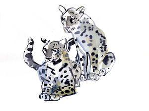 Zwei männliche Leoparden
