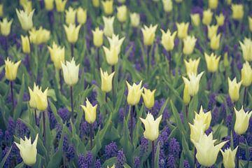 Blumengarten | Tulpen und blaue Trauben von Marianne Twijnstra-Gerrits