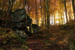 Herfst in het bos met rotsen