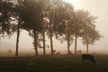Kühe im Nebel von Sabina Meerman