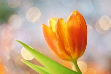 Tulp met vrolijke achtergrond von Cocky Anderson