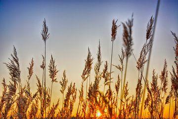 Lente zonsopkomst achter riet von Guido  van Herpen