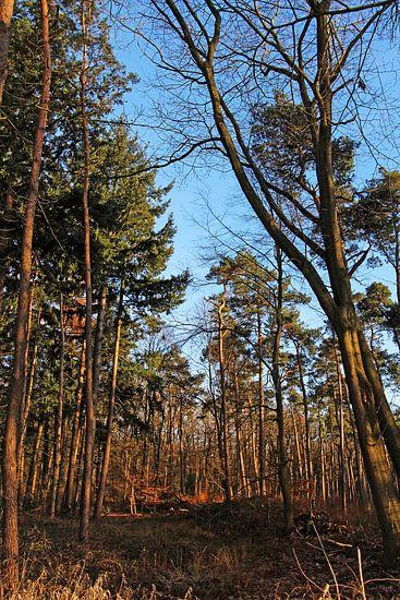 Het Kottense Bos van Yvonne Blokland