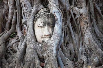 Buddhakopf im Baum (Wat Phra Mahathat) von Hans van Luijk