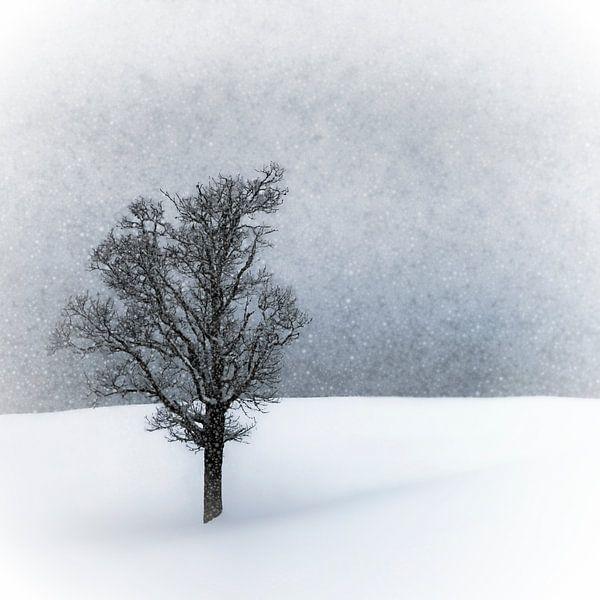 LONELY TREE Idyllic Winterlandscape van Melanie Viola