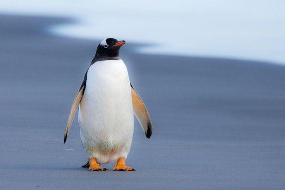 Just a penguin van Claudia van Zanten