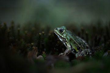 Der Froschkönig von Aukje Ploeg
