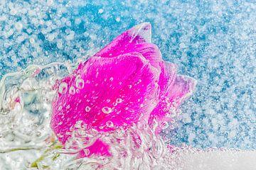 Tulp in wild water von Jenco van Zalk