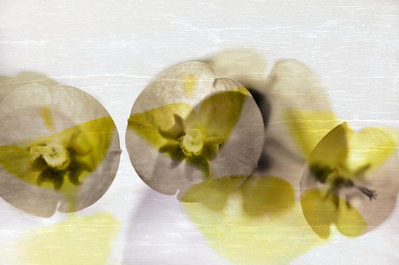 Euphorbia sur Martine Affre Eisenlohr