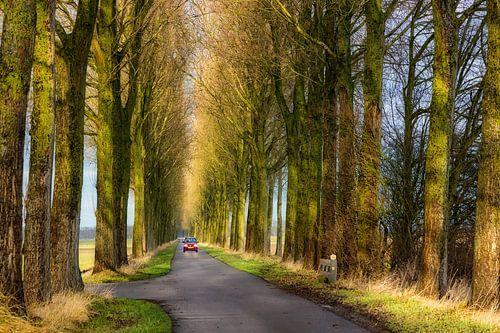 Een kleine rode auto tussen  enorme bomen
