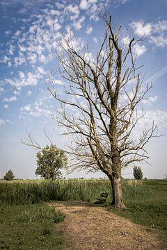 Kale boom in de Oostvaardersplassen van Jeffrey Van Zandbeek