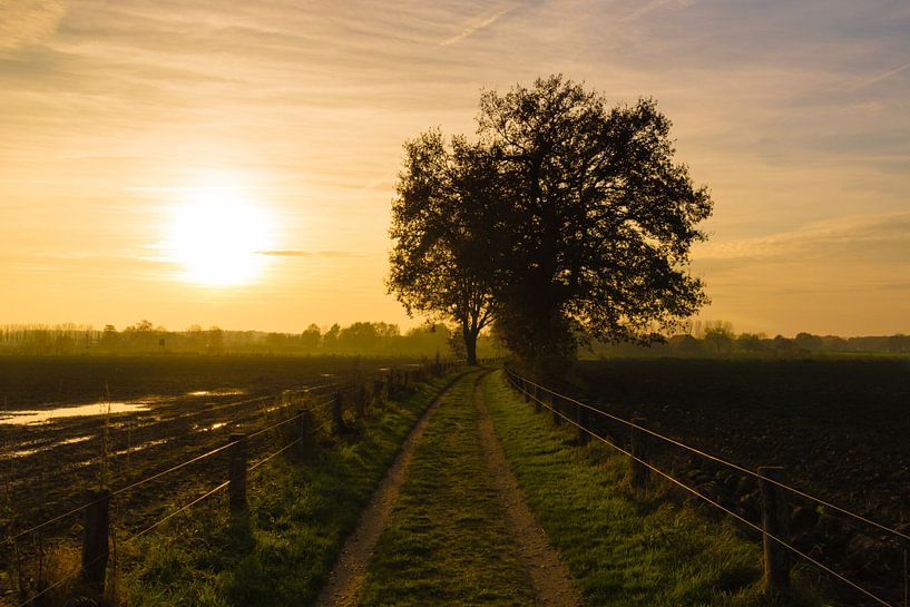 Sunset Path van William Mevissen