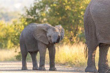 Bébé éléphant sur Dennis Eckert