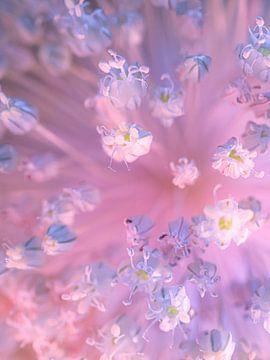 Nachtblumen von Anne Vogel