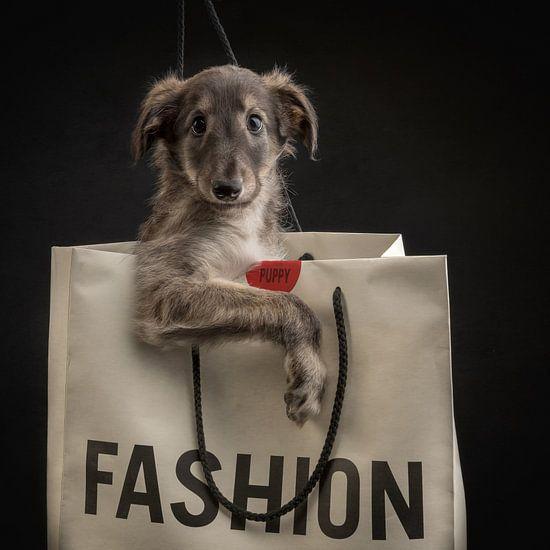 Puppy in tas