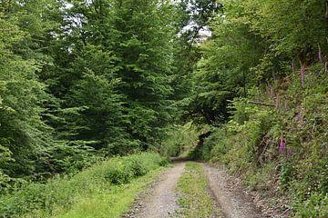 Uitzicht op een bos vanaf het bospad van Philipp Klassen