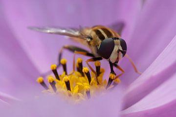 Zweefvlieg op lila bloem van Evelyne Renske