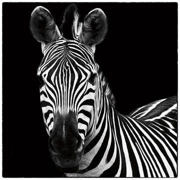 Zebra II Square van Wild Apple