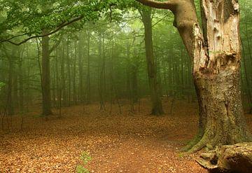 Nebelwald am Meer von Heike Hultsch