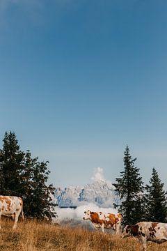 Koeien boven in de bergen in Oostenrijk (Alpen) van Yvette Baur