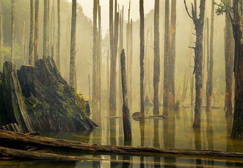 Wanyou Forest in Nantou, Taiwan van Jos Pannekoek