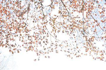 boom in de lente van Marian Steenbergen