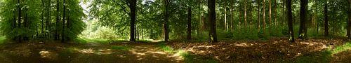 Panorama  Hoge Veluwe fotograaf Fred Roest van Fred Roest