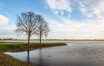Twee kale bomen in een ondergelopen Nederlandse polder van Ruud Morijn