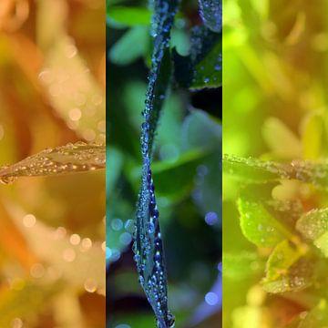 Triptyque végétal van Martine Affre Eisenlohr