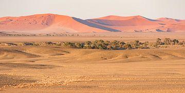 Namibië, woestijn, Sossusvlei van Jeannette Kliebisch