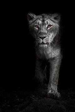 Ascheweiße, ascheweiße, mondbeschienene Nachtlöwin in der Dunkelheit mit hellen, ebenholzfarbenen Au von Michael Semenov