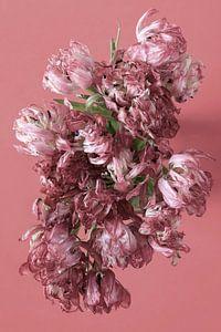 Tulpen von Anette Jäger